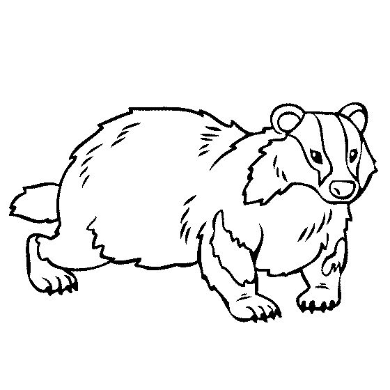 Badger Coloring Page Projects To Try Badger Color