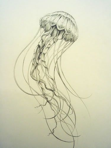 jellyfish. beautiful linework. This would look great as a start to the half sleeve I want