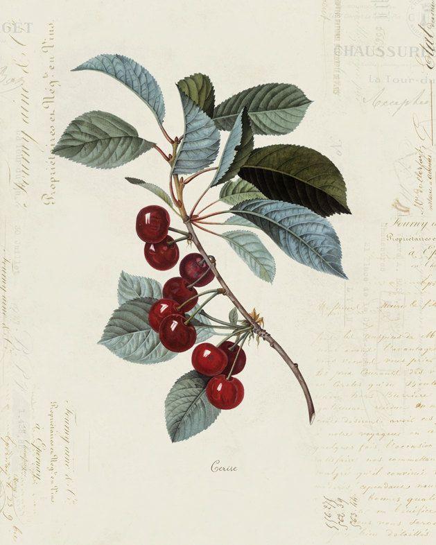 Vintage Cherry Print