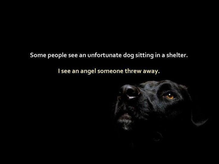 Cortland County Spca Dogs For Adoption