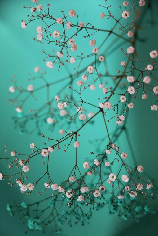 Fleurs / photographie / turquoise                                                                                                                                                                                 Plus