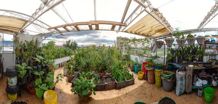 Cada vez más personas en el mundo destinan un lugar en sus casas para sembrar hierbas aromáticas e incluso vegetales y frutas. La agricultura urbana es toda una tendencia sostenible que busca producir en pequeña escala alimentos seguros, limpios y variados.