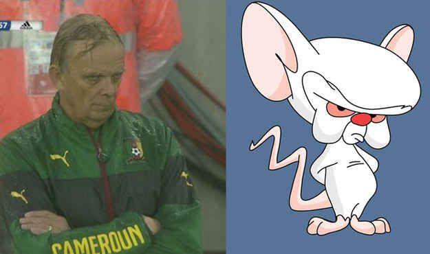 Ils sont les mêmes ! | Le coach de l'équipe camerounaise ressemble exactement à Cortex de « Minus et Cortex »