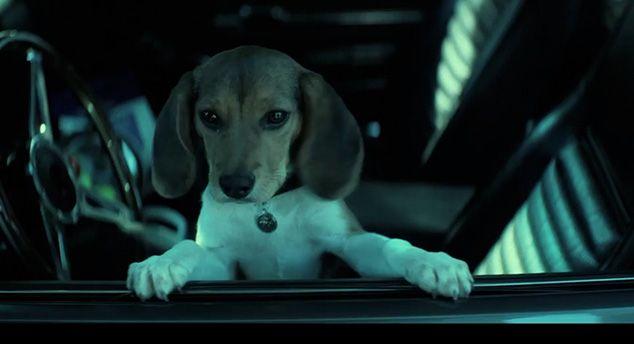 John Wicks Dog
