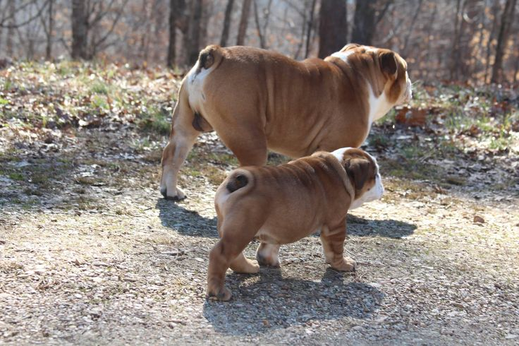 Adorable puppy butts!!