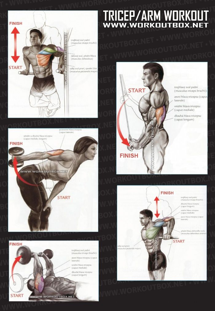 Tricep Workout - Healthy Fitness Exercises Gym Low Body Arms - Yeah We Train !