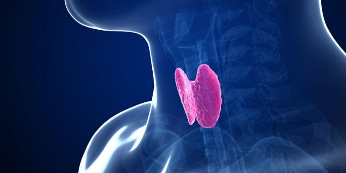 Why Your Thyroid Needs Selenium and How To Get It. Selenium is a trace element that rocks a critical role in thyroid hormone metabolism.