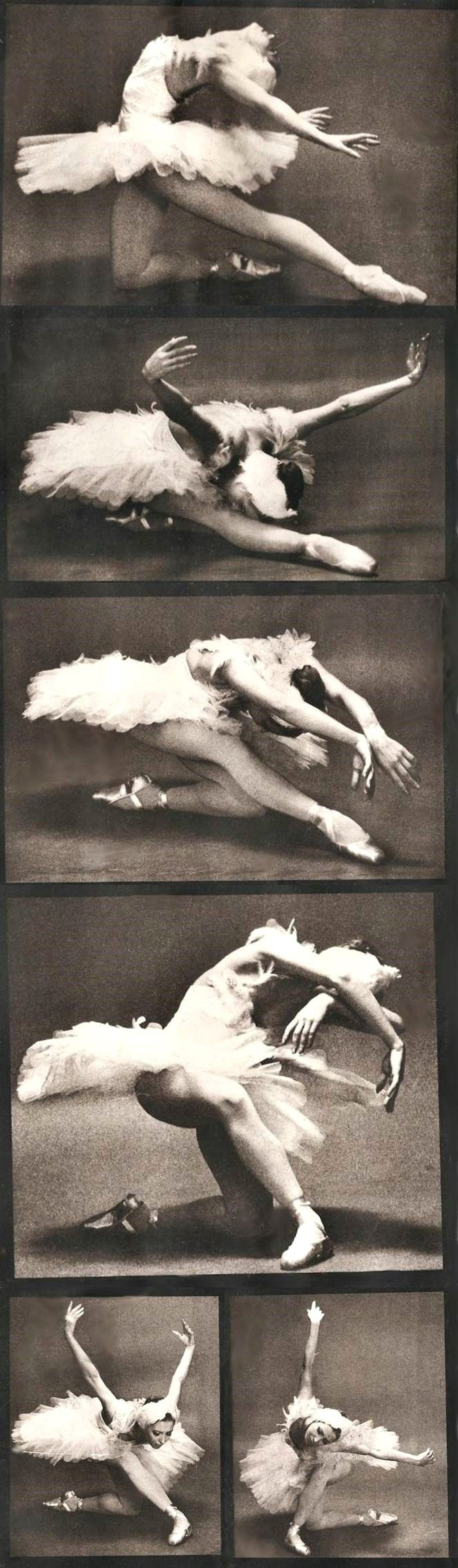 Natalia Makarova (in 'The Dying Swan') by Max Waldman, 1975. Such a gorgeous back! I first saw her dance in 1970 after she defected. Such an inspiration.                                                                                                                                                     More