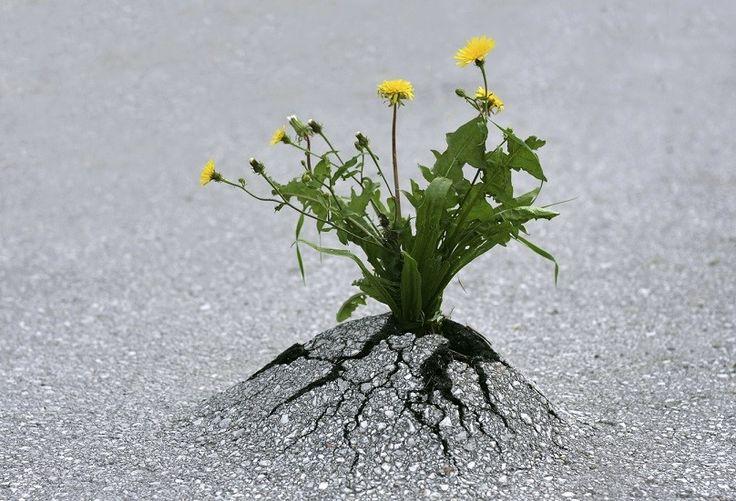 """La resiliencia en realidad significa volver nuestro estado anterior, nuestro estado """"natural"""" por decirlo de alguna manera"""