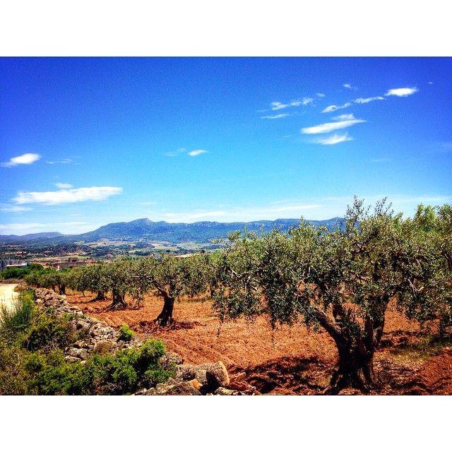 Instagram photo by @montblancmedieval via ink361.com