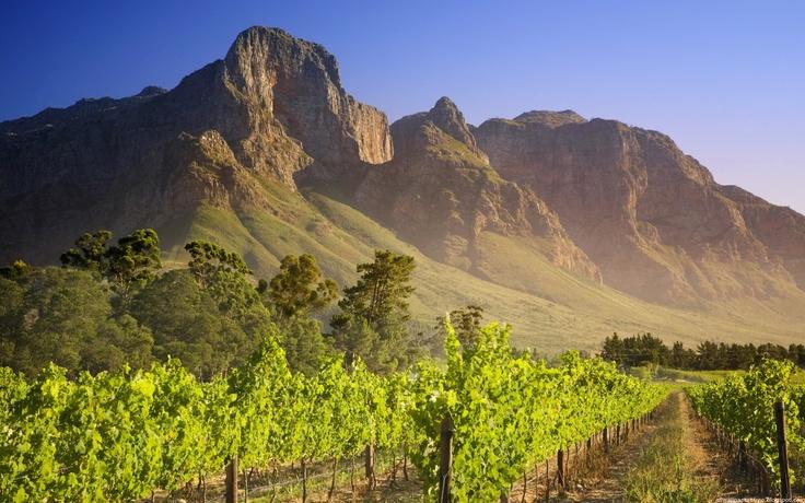Winelands, Constantia, Cape Town