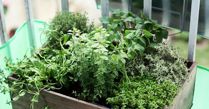 Successfully Grow Herbs and Veggies  in Window Boxes