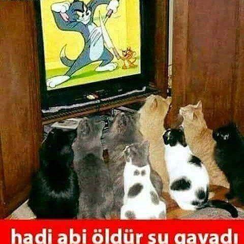 #gunaydin #iyigunler #yenigün #karikatur #karikatür #komik #eğlence #kalem#kedi #fare #tv #gulmek #mizahi #mizah #cizgi #resim #türkiye #türkey #istanbul #izmir #ankara #adana #adiyaman #mersin #eskisehir #artvin #antalya #hatay #sivas #kars http://turkrazzi.com/ipost/1520762749121390341/?code=BUa1am5BucF
