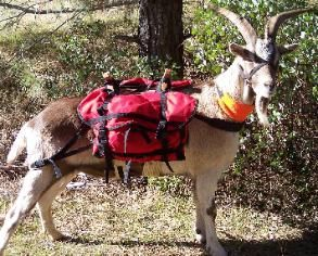 how to make a goat pack saddle