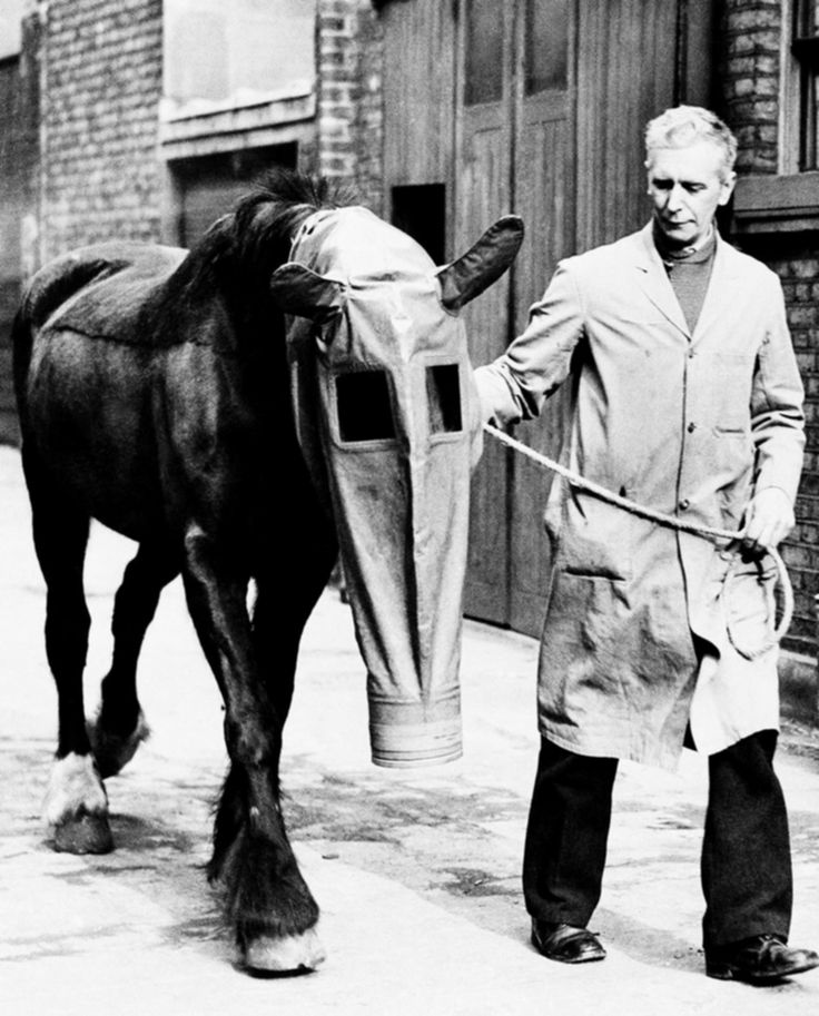 The British version of a gas mask for horses. It was designed by the London-based League for Our Dumb Friends (!)