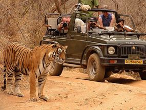 Jungle Safari in Rajasthan Tour will take to Ranthambore National Park and bharatpur bird sanctuary. Bhati Tours offer great deals in Wildlife Tour Package. More @ http://bhatitours.com/rajasthan-jungle-safari-tour-package