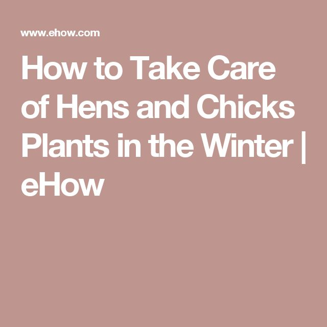 How to Take Care of Hens and Chicks Plants in the Winter | eHow More