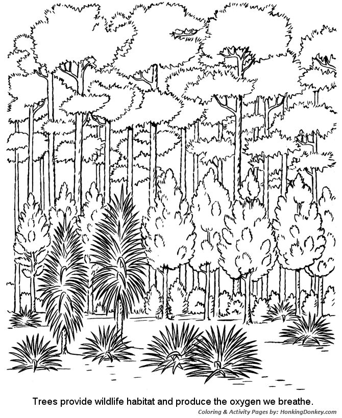 Arbor Day Coloring Pages - Forest trees