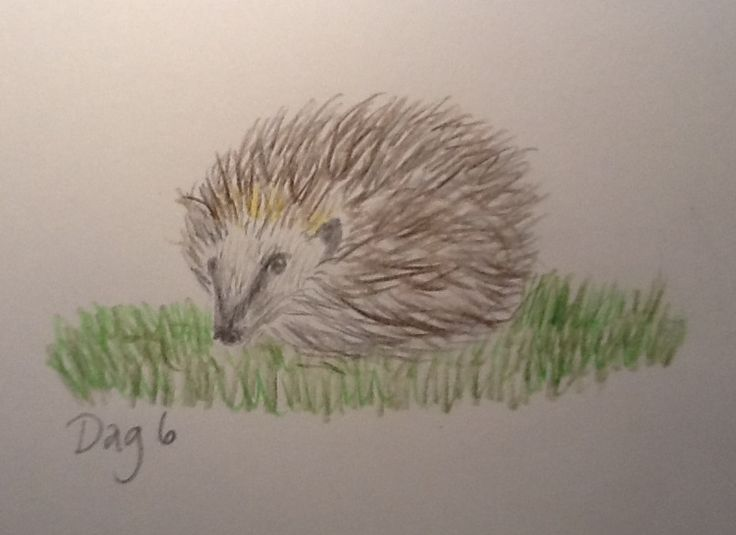 #Day6 - Hedgehog