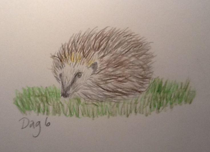 #Day6 - Hedgehog