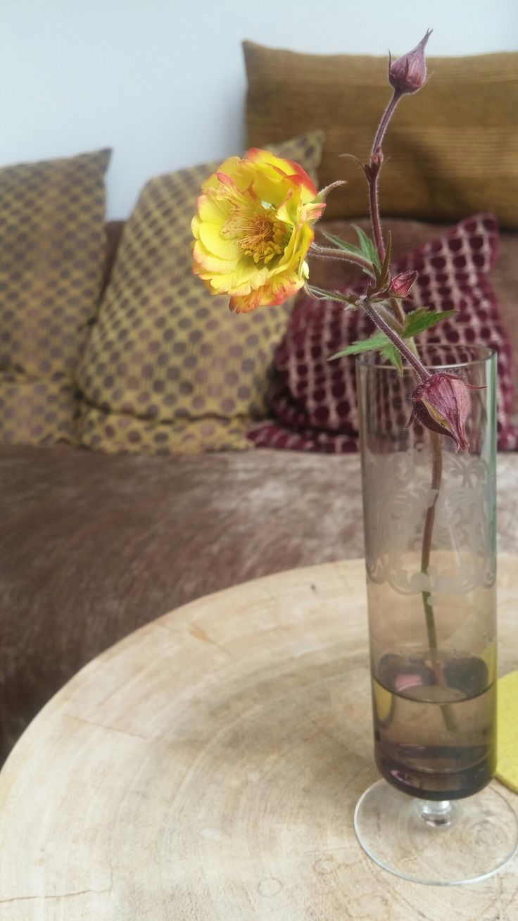 Geum 'Tequila Sunrise' zo mooi, donkere steeltjes met gele bloemen met perzik/roodkleurig randje. Binnen kun je er ook van genieten in een vaasje, bloeit best lang, zelfs de knopjes gaan nog open binnen