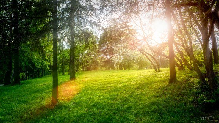 Nature | Andrei Solomon Media