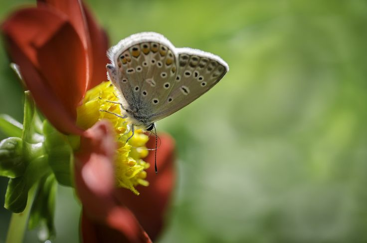 Flower, butterfly and sunshine