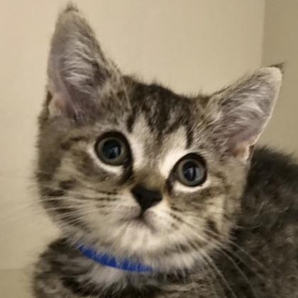Adopt a Pet | Cats | Cats, Lollypop farm, Cute cats