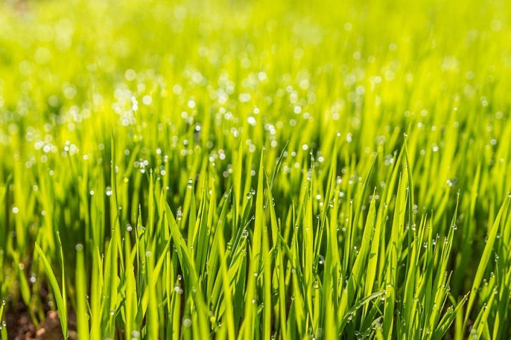 Timing Is Everything When Is The Best Time To Plant Grass Seed