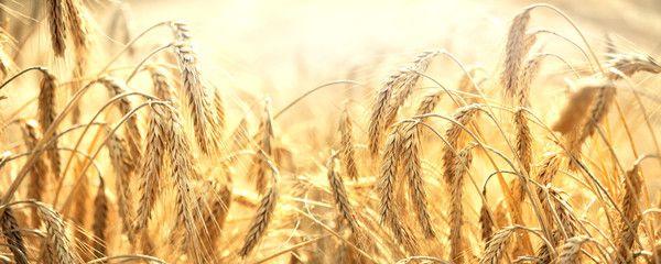 Comprende el significado de las ofrendas de grano mencionadas en Levítico 2 con esta cita del manual de seminario del Antiguo Testamento.
