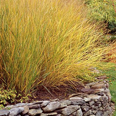 Top 10 plants for coastal gardens grasses gardens and for Top ten ornamental grasses