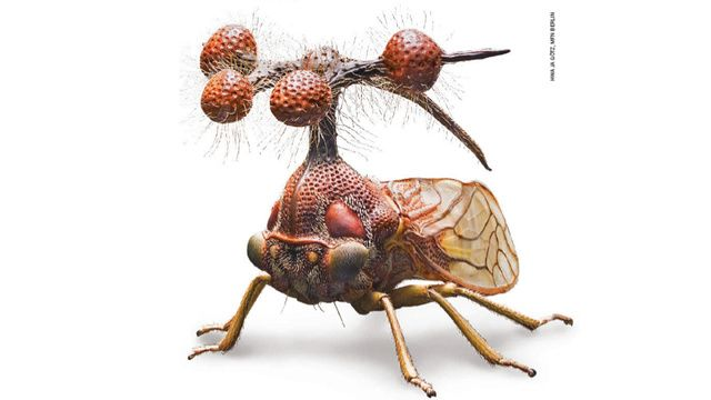 """The Brazilian Treehopper    Yep, it's a real thing. Google it!  That crazyornamentthing on its body isn't some weird antenna, instead those """"balls"""" are hollow spheres of chitin probably to try and scare away predators. Would you want to chew on that? And those bristles surrounding the spheres are most likely used for some unknown tactile function.    Read more at Why Evolution is True"""