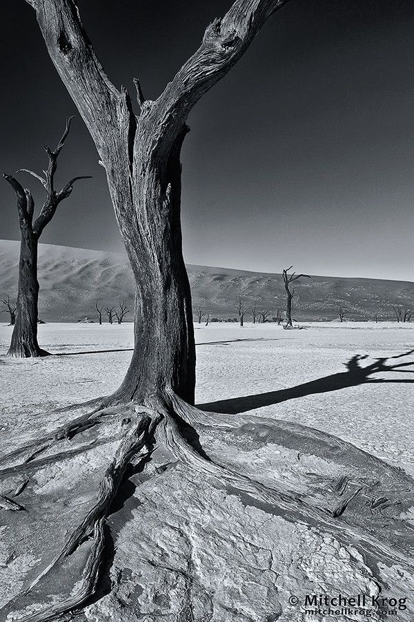 The Trees of Deadvlei Namibia by Mitchell Krog on 500px