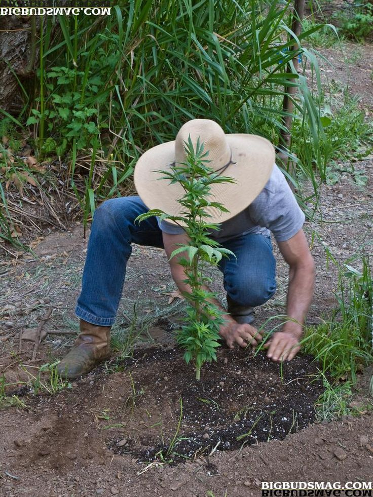What Separates a Good Grower from a Poor One? Find Out Which One You Are!