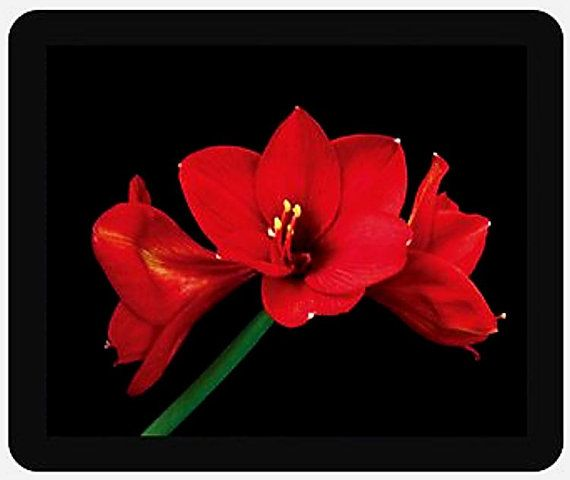 Dynamic and Impressive Red Amaryllis Flower Mouse by IshiGallery, $10.50