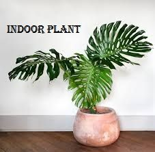https://www.flowerwyz.com/send-plants-send-a-plant-delivery-orchid-delivery.htm  Click Here For Indoor Plants,  Indoor Hanging Plants,Order Plants Online,Buy Trees Online  Think You're Cut Out for Doing Flowering House Plants? Take This Test. Extremely Straightforward Things You Can Do To Save Tropical Plants For Sale.