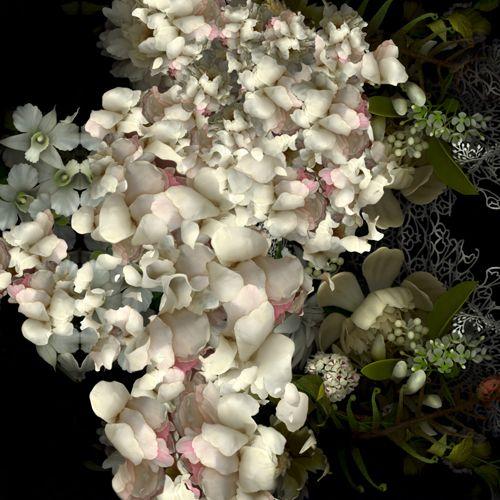 yedda morrison .... amazingArt Flor, Morrison Floral, Biopsy, Search, Photographers Series, Beautiful, Yedda Morrison, Flower, Colors Inspiration