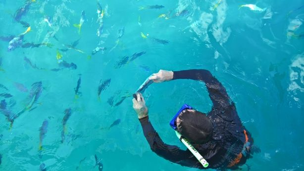 Poze făcute de specialist National Geographic cu noile Lumia la Marea Barieră de Corali