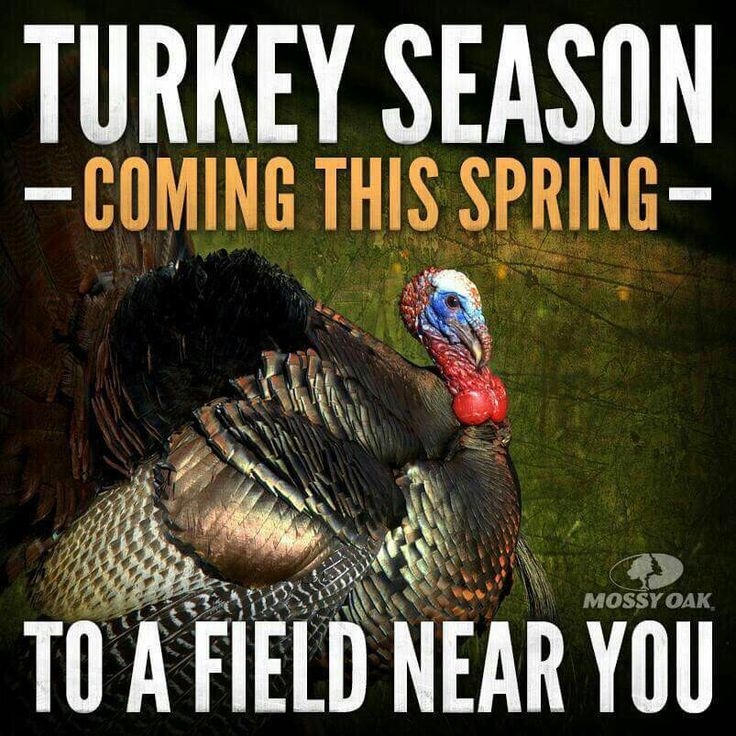 And that's when the TURKEY FEVER sets in. Turkey hunting