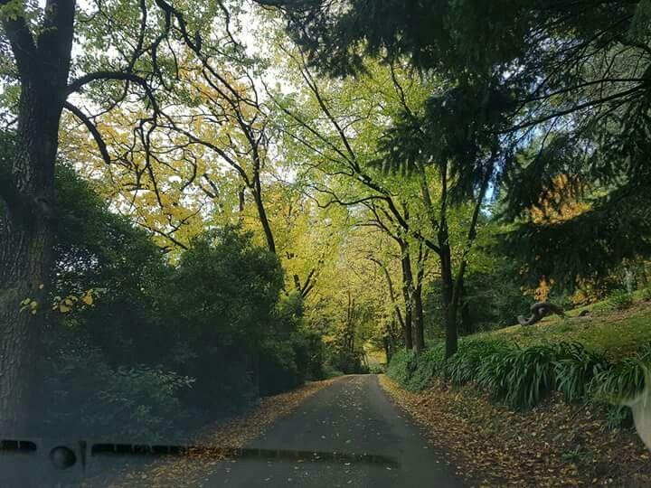 Autumn colour in Daylesford