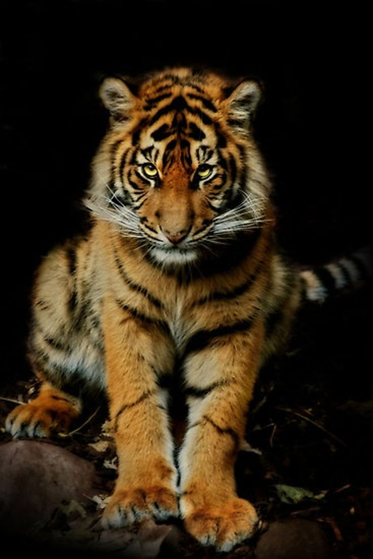 """""""This is my demure look..."""" Top 10 Brilliant Wild Animals Photos By Natalie Manuela."""