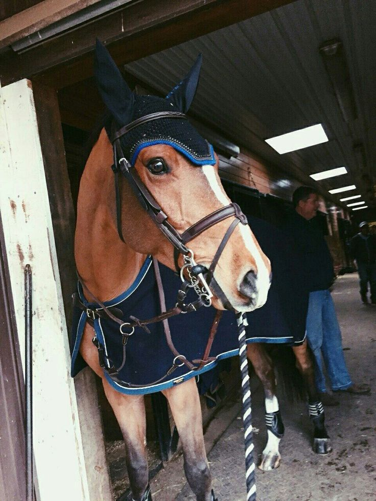 London ready to go ride!