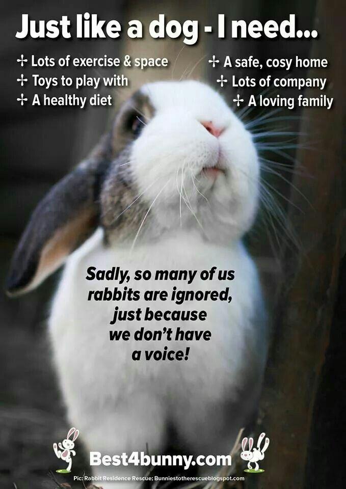 Bunny needs....