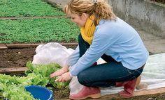 Die Ernte verfrühen, Obst und Gemüse vor Schädlingen schützen, Unkraut-Wuchs verhindern oder das Gartenjahr um einige Wochen verlängern – wer die richtigen Vliese, Netze und Folien bereithält, ist darauf bestens vorbereitet.
