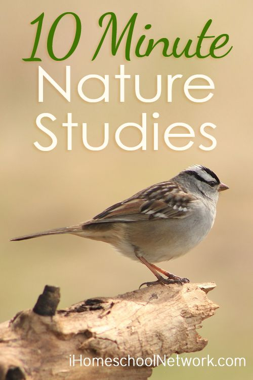 10 Minute Nature Studies