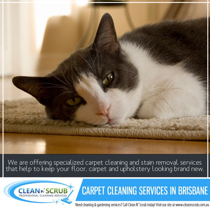Why Choose Clean N' Scrub Carpet Cleaning? - We only use the best available cleaning products and equipment - Non-hazardous cleaning agents wherever possible - We make sure your office meets all standards for cleanliness - Ongoing employees training to keep them updated with new cleaning - Industry technologies for new products and consumer requirements.  Visit our website at www.CleanNScrub.com.au to view our services.