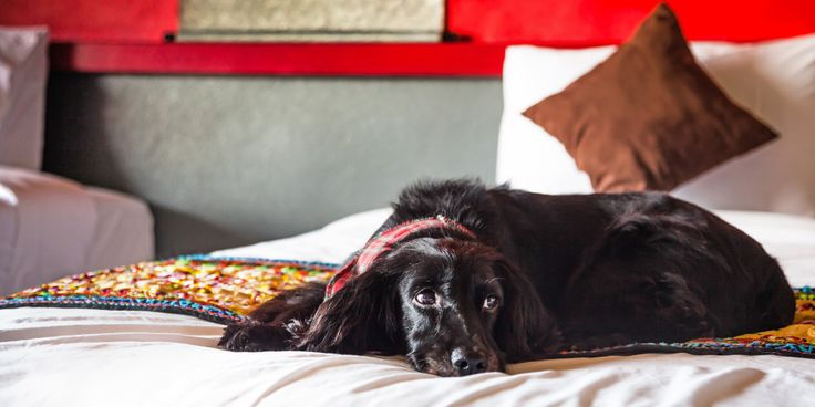 10 of the Best Dog-Friendly Hotels in the UK - Travelzoo UK