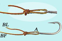 Pitzen knot,one of the best fishing knot to tie hook to the tippet.