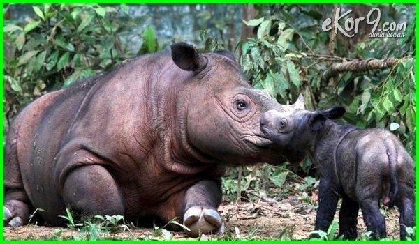 11 Hewan Khas Indonesia Yang Harus Kamu Tau Dunia Fauna Hewan Binatang Tumbuhan Hewan Langka Hewan Binatang