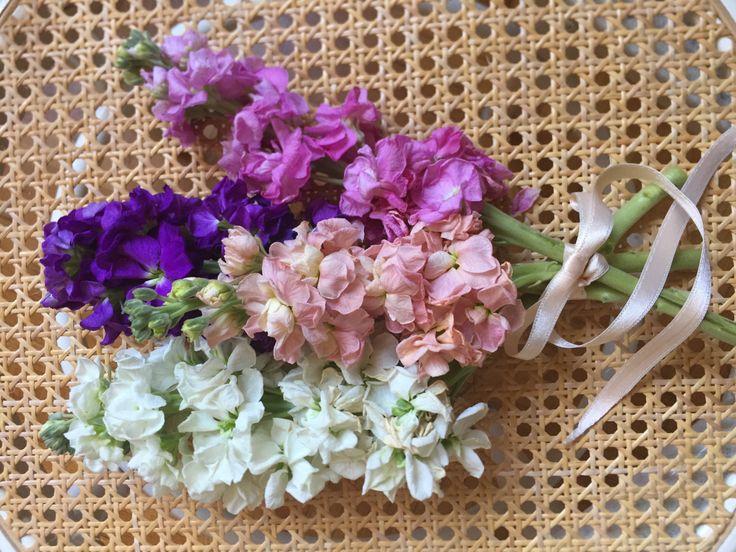 I fiori di Nico: Bocche di Leone